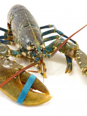 Demi-homard Bellevue